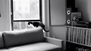 Sunbathing-Animal-video-608x341