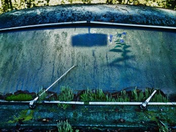VOITURES-ABANDONNEES-1